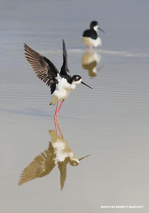 Aeo birds