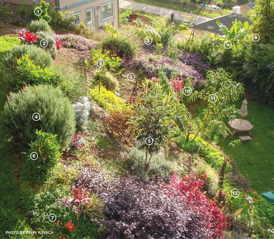 edible landscapes edible landscaping food gardens