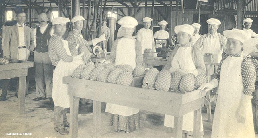 Haiku cannery pineapple workers
