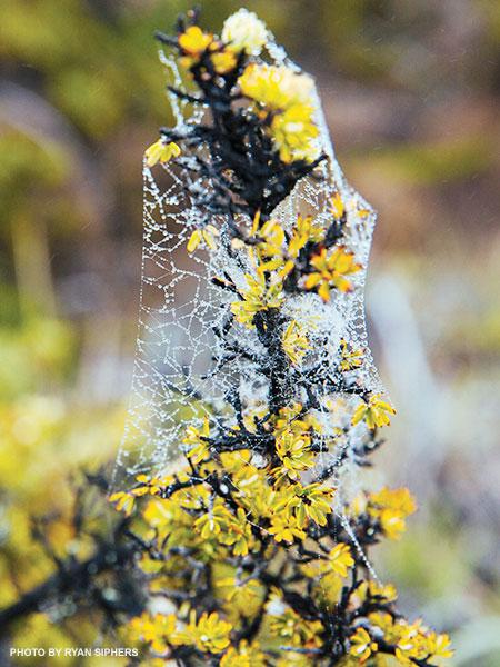 Haleakala Crater lichen