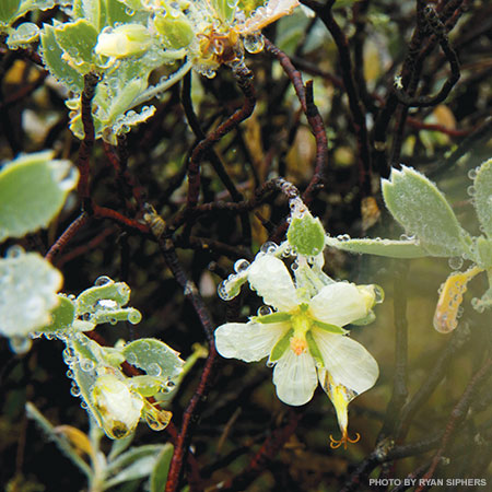 Haleakala Crater flowers