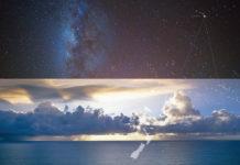 hawaiian cosmos