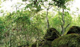 Honokowai Valley