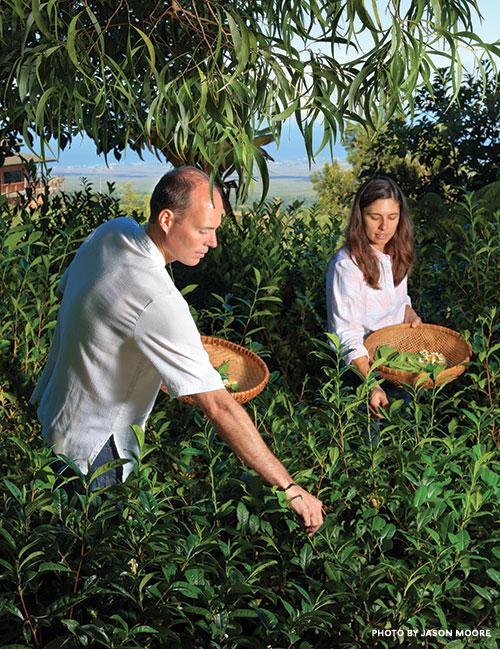 maui tea farmers