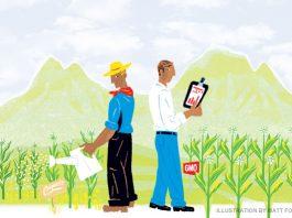 GMO crops illustration
