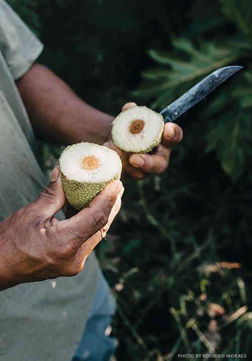breadfruit cut open