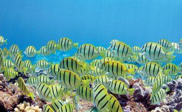 Kahekili Reef