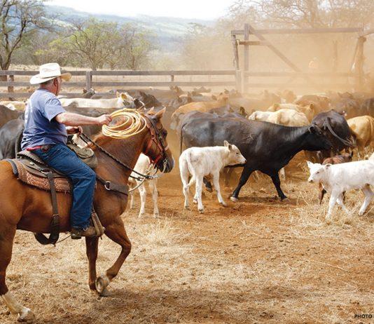 Kaonoulu Ranch