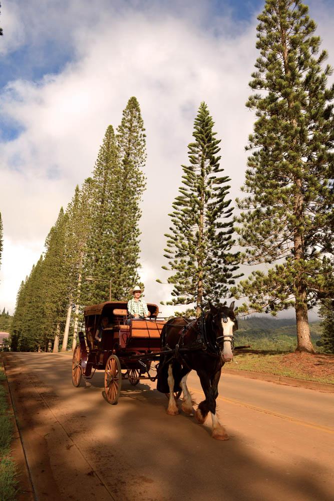 Lanai Hawaii horse carriage