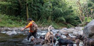 pig hunting maui