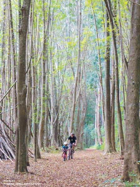 Makawao state forest hike