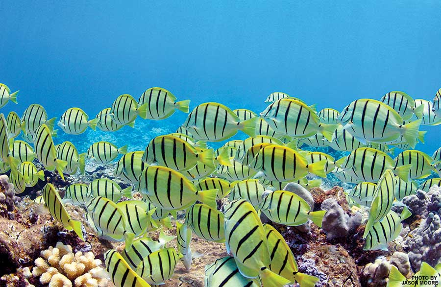 best snorkeling Maui Hawaii