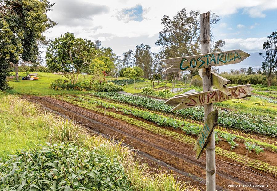 Maui boutique farms