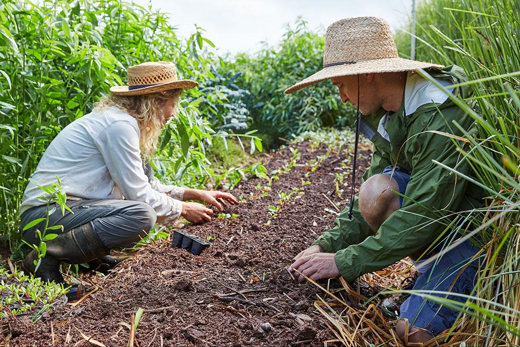 Maui Farmers