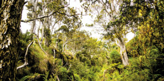 Maui Forest Bird Recovery