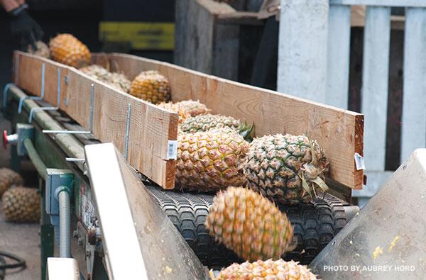 Maui pineapple company