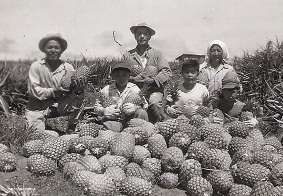 Maui pineapple workers