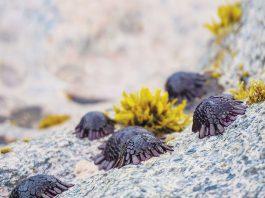 maui sea urchins