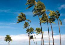 maui trade winds