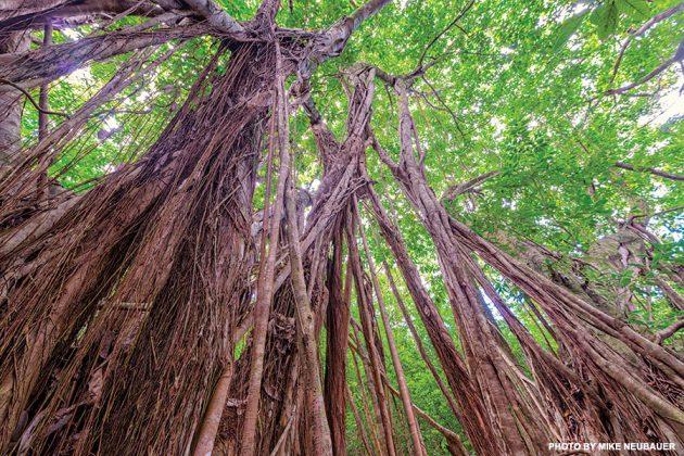 Maunalei Arboretum Trail in Maui