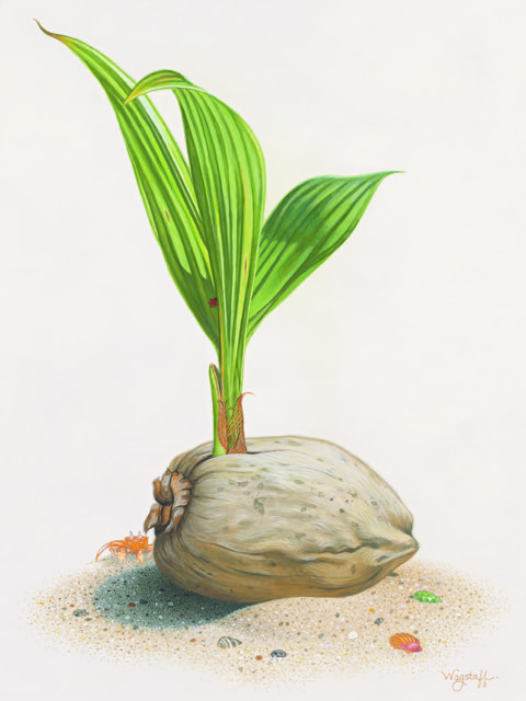 coconut illustration