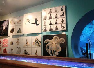 Papahanaumokuakea gallery