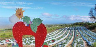 kula country farms