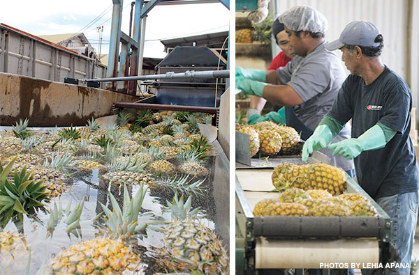 pineapple processing