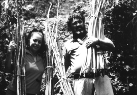 Pua and Sam Ka'ai returning from 'Iao Valley with root stock for planting and sticks for immediate use.