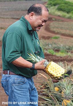 ripe Maui pineapple