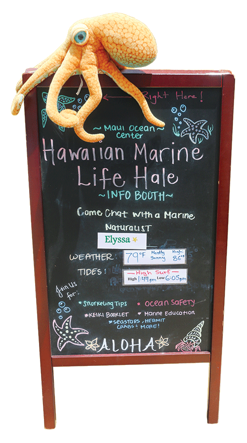 Sheraton Maui marine life program