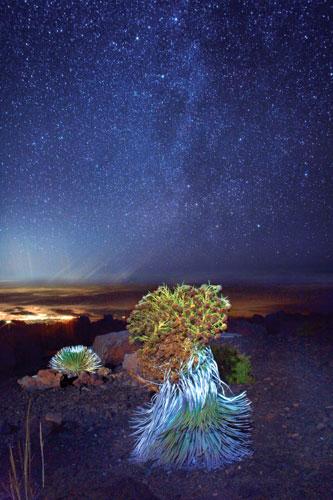 Silversword Haleakala night
