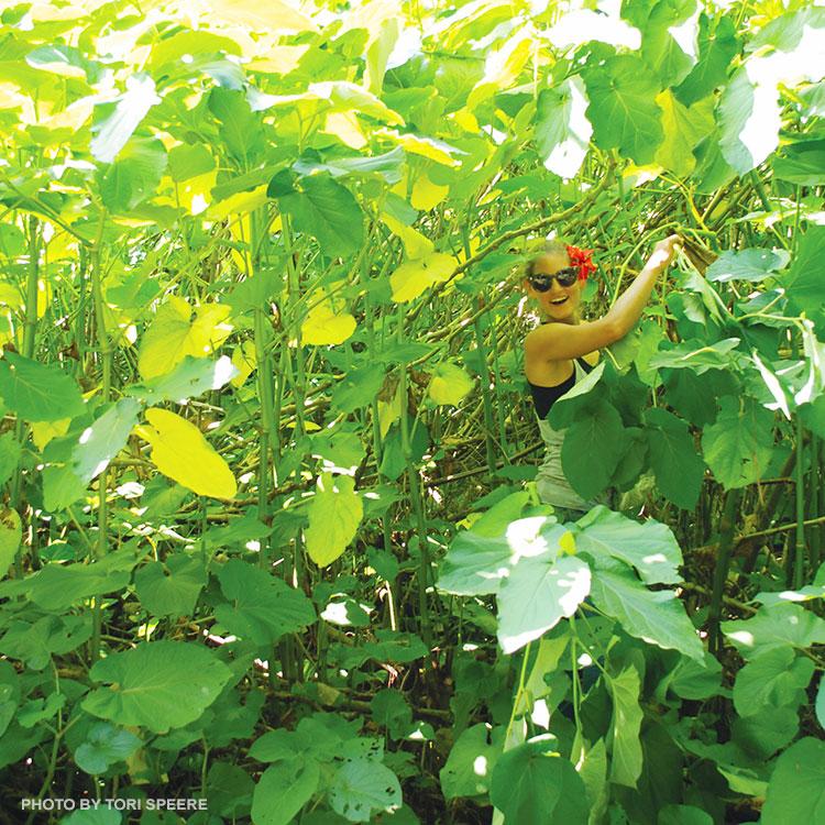 Sunny Savage Maui No Ka Oi Magazine