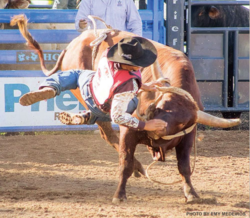 protection bullfighter