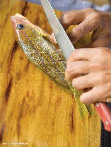 taape fish