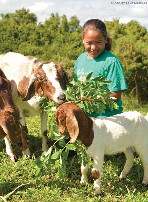 maui farm goat