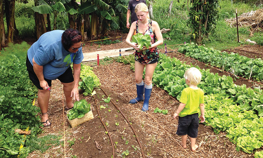 Maui Farm community garden