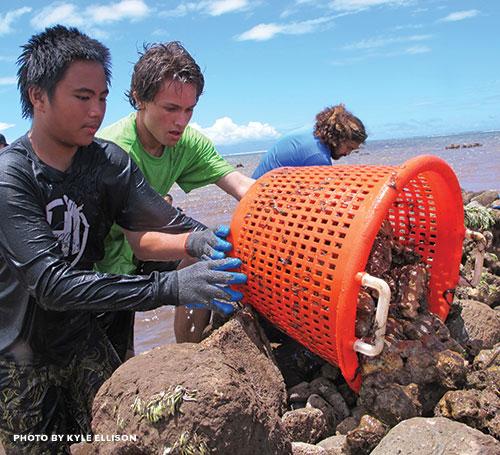 Waiapoe Fishpond Restoration