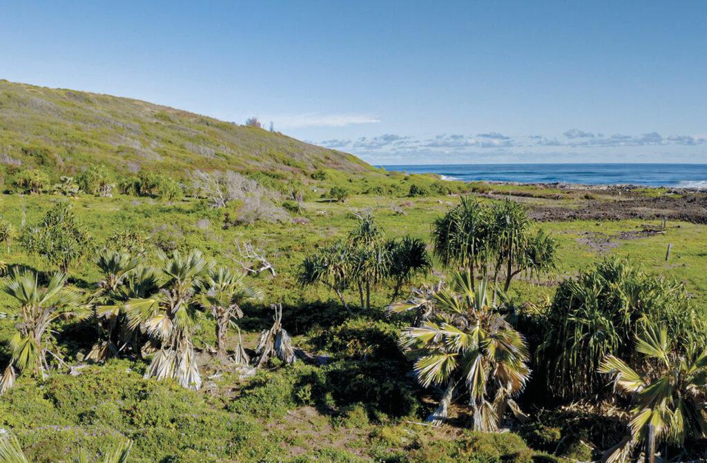 Waihee wetlands