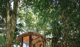 amazing jungle shower