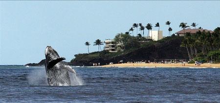 black rock beach maui
