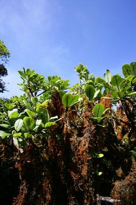 bog-plant
