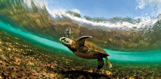 amazing turtle photo