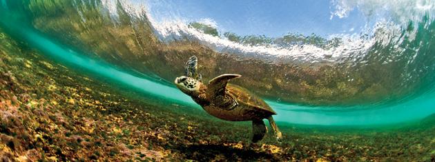 amazing turtle photo