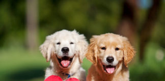 assistance dogs maui