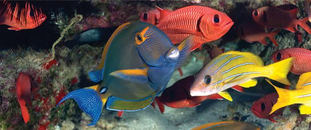 fish on scuba adventure