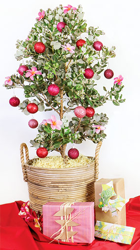 buy ohia tree for christmas in maui