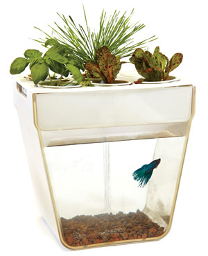 fish tank with herbs on top