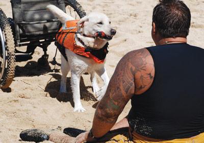dog helpers maui