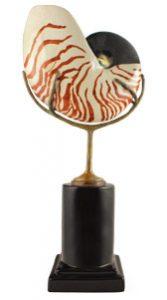 great-finds-ceramic-nautilus-minds-eye(1)